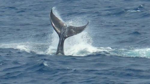 子鯨がノリノリです